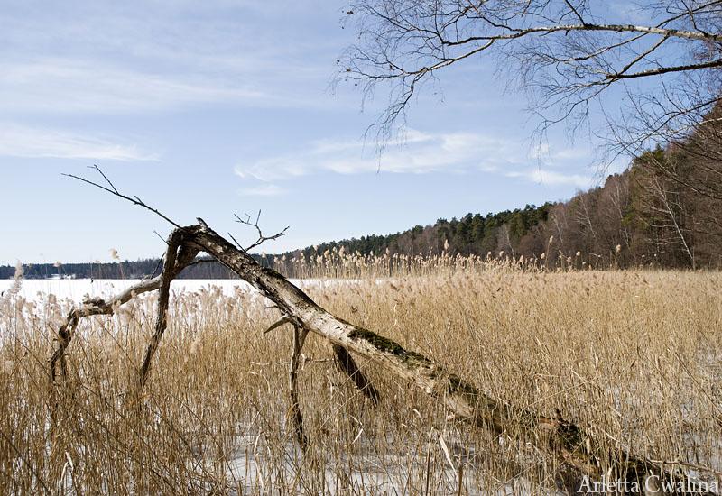 powalone drzewo na jeziorze w Rucianem Nidzie