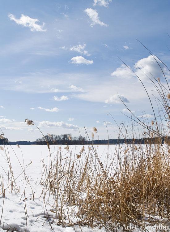 trawy na jeziorze Nidzkim w Rucianem Nidzie