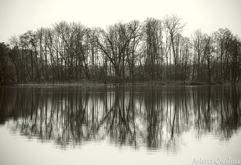 drzewa na jeziorze Nidzkim w Rucianem Nidzie