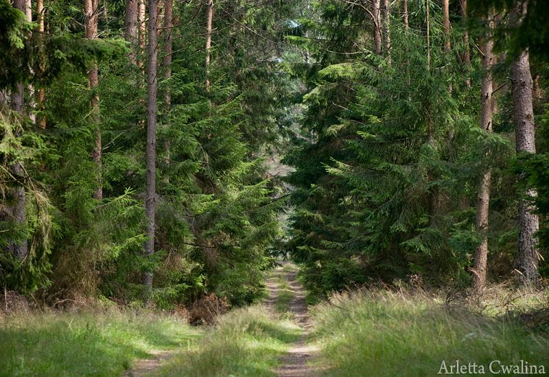 las w Rucianem Nidzie, Puszcza Piska