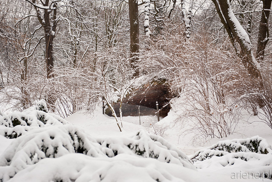 Łazienki Królewskie zimą