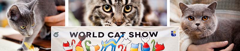 Światowa Wystawa Kotów Rasowych w Warszawie 2013