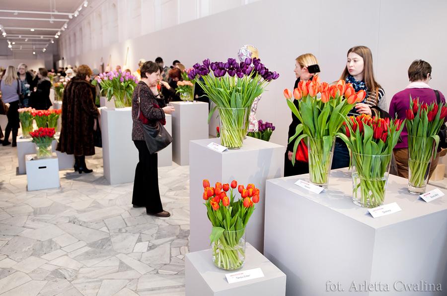 V wystawa tulipanów w Oranżerii Muzeum Pałacu w Wilanowie, Warszawa 2013