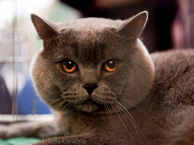 Wystawa Kotów Rasowych