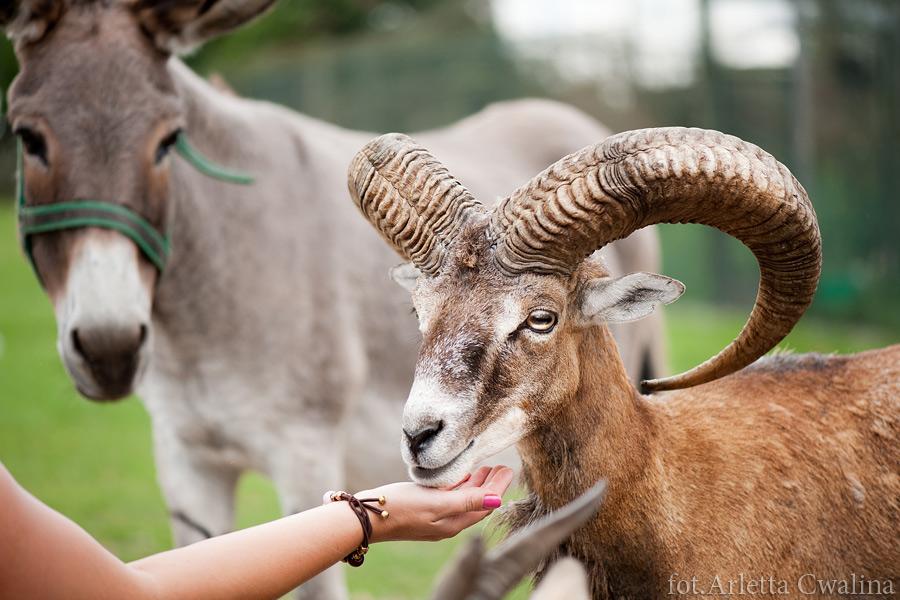 zdjęcia z Parku Dzikich Zwierząt w Kadzidłowie