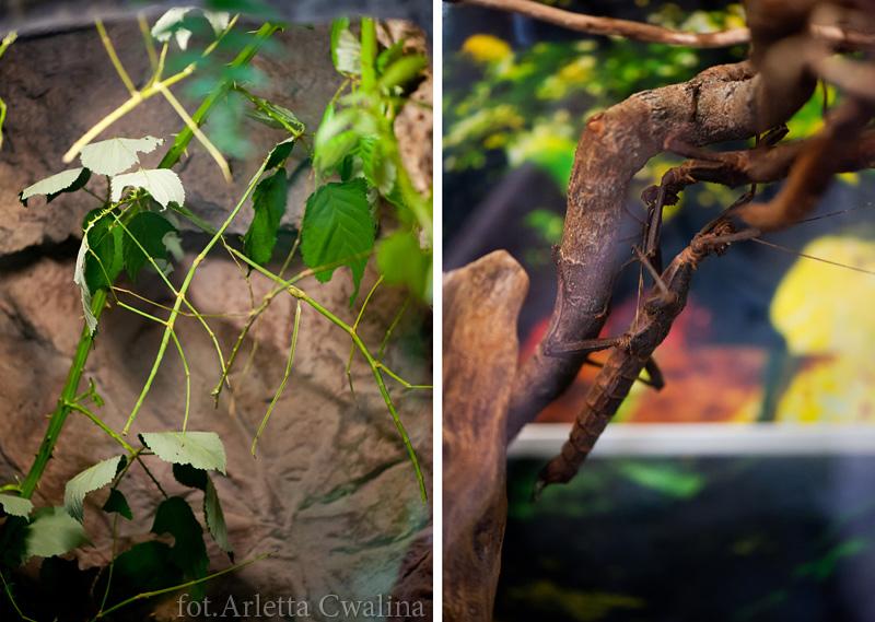 Warszawskie Zoo