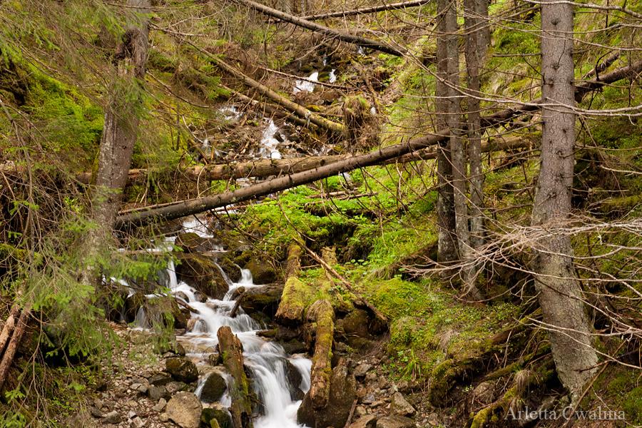 strumień w Tatrach
