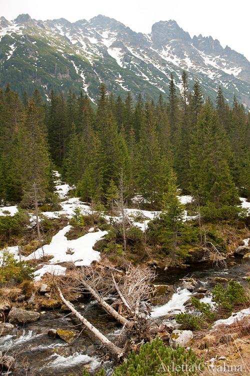 widok w Tatrach