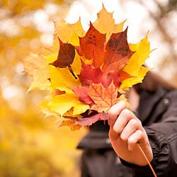 bukiet jesiennych liści w dłoni