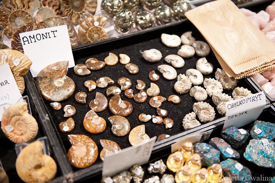 muszelki skamieniałe