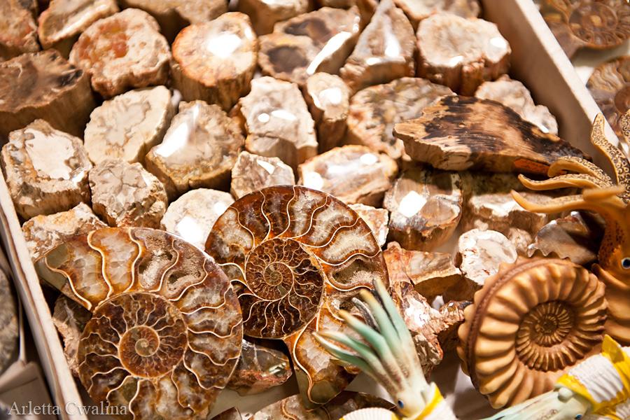 skamieniałe muszle