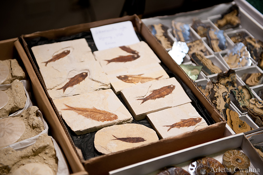 skamieniałości ryb