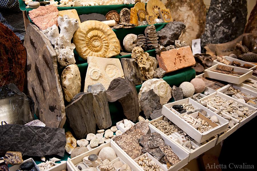 skamieniałości archeologiczne