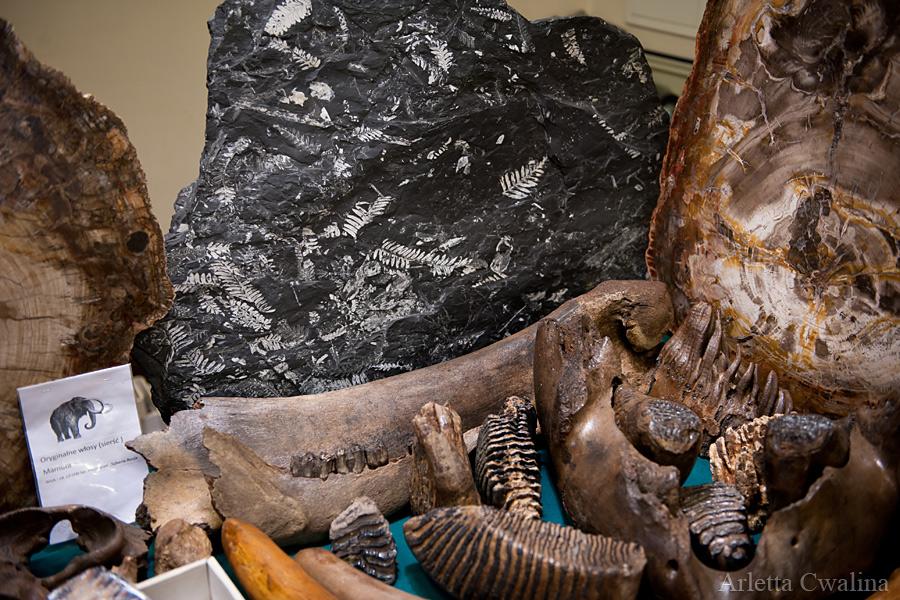 skamieniałości zwierząt i roślin