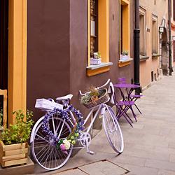 lawendowy rower