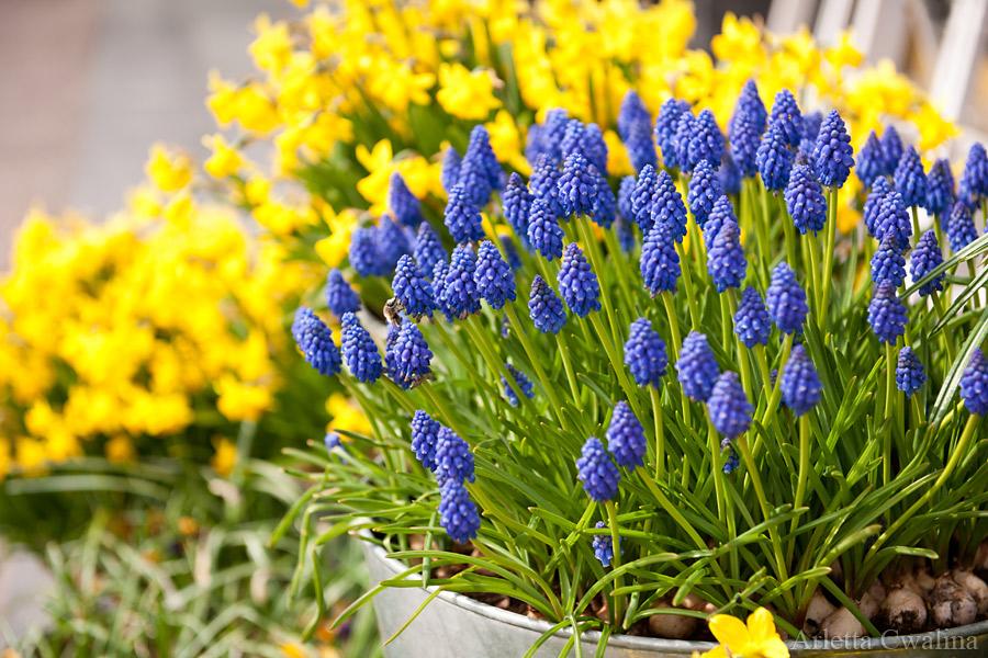 kwiaty w Sopocie