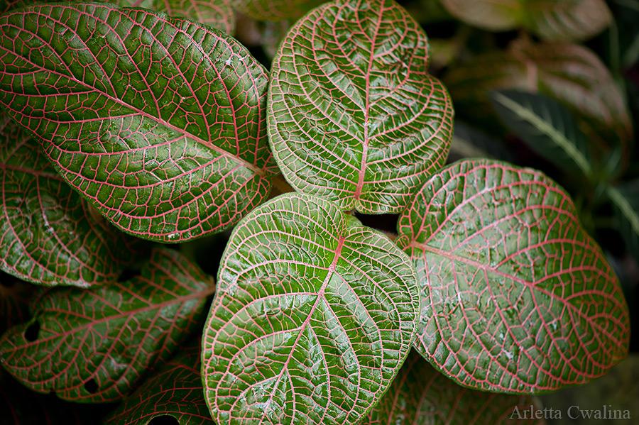 Wystawa roślin owadożernych